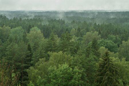 pinewood: Pinewood after heavy rain