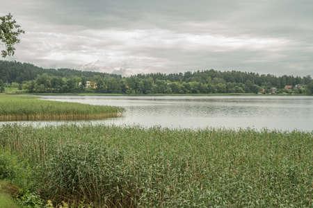 canne: Lago ricoperta di canne