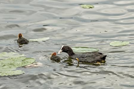 nourish: Ducks nourish their children