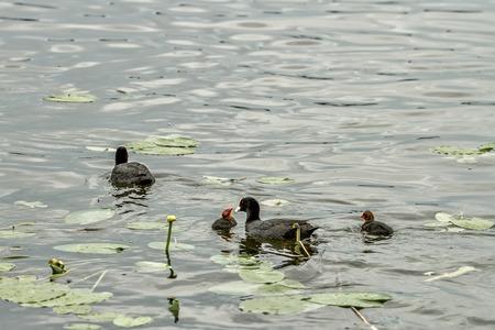 nourish: Duck nourish their children