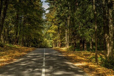 The road between yellow trees