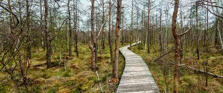 A narrow path runs through a large swamp