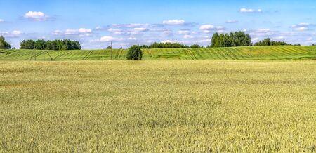 Autumn farmers' yellow fields Standard-Bild - 138645599
