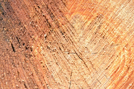 texture of tree stump  photo