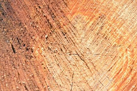 texture of tree stump Stock Photo - 15040177
