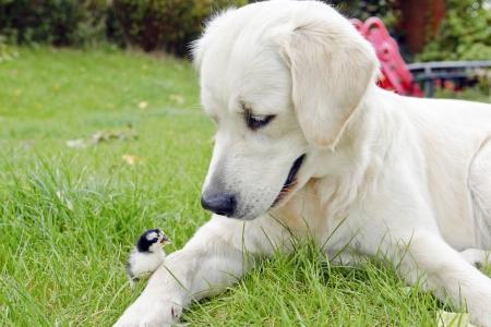 dog with her best friend in the garden