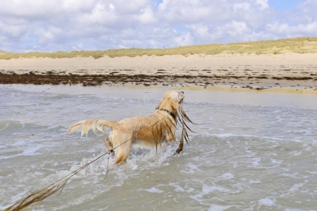 dog playing with waves in ocean photo