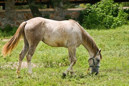 Grazing horse in Mexico