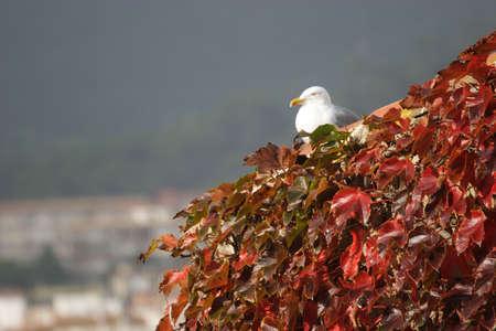 hojas: Gaviota descansando entre las hojas de esta planta que cubre un tejado. Stock Photo