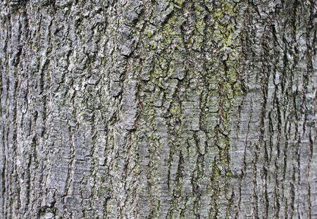 Tree bark texture rough surface