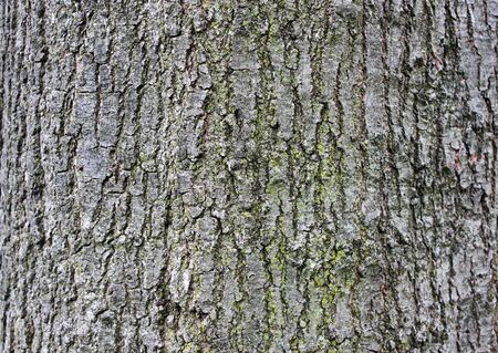 Tree bark texture rough surface 版權商用圖片 - 127356109