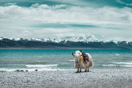 De rand van de bergmeren van witte jakken Stockfoto