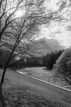 Black and white photo. Spring day in the Park. Riverside. The suns rays illuminate the trees. 写真素材