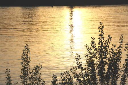 wasser: Rhein bei Mannheim und Sonnenuntergang