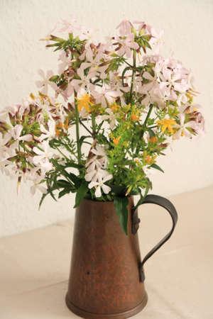 pflanzen: Wiesenblumen