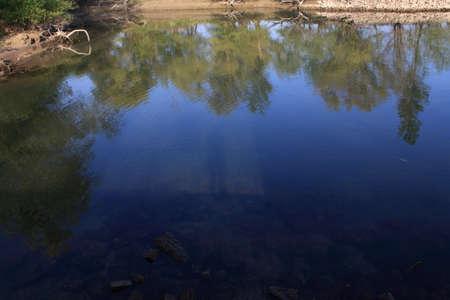 관목 이미지가있는 물