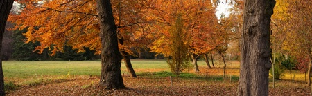panoramic view of autumnal park photo