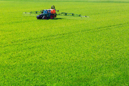 pesticides: tractor spraying glyphosate pesticides on a corn field Stock Photo
