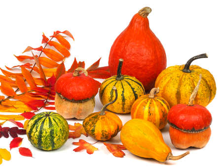Nine pumpkins and autumn leaves isolated on white
