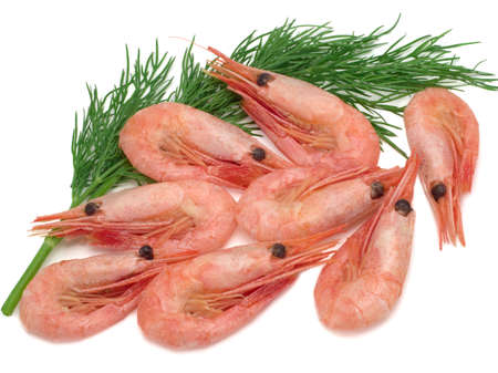 Fresh cooked shrimp and a sprig of dill on white background. Seafood. Stock Photo