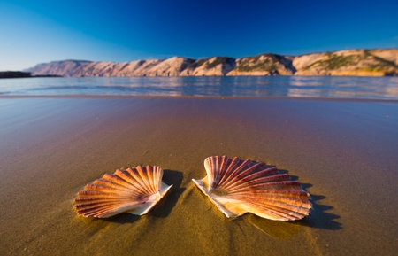 Beautiful landscapes, shells on the beach in Croatia photo