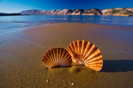 크로아티아의 해변에서 아름 다운 풍경, 조개