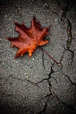 Maple leaf on the broken pavement photo