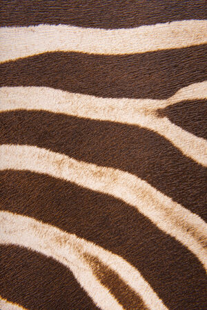 tangible: Brown striped zebra fur imitation, background