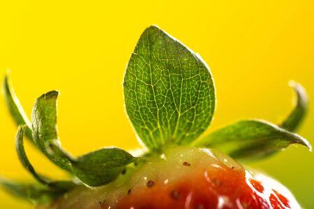 'wild strawberry: Wild strawberry isolated on yellow background, close-up
