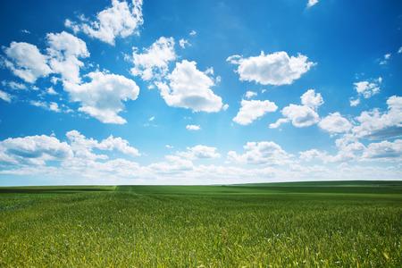 봄이, 신선한 녹색 잔디와 솜 털 구름 배경 스톡 콘텐츠