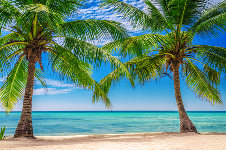 exotic: Palm trees at Exotic Beach, Dominican Republic