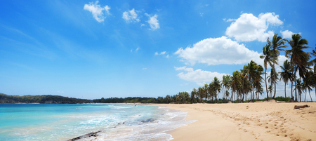 Palm trees on the tropical beach, Macao, Punta Cana, Dominican Republic