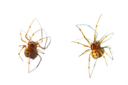 predatory insect: Close up on spiders isolated on white background Stock Photo
