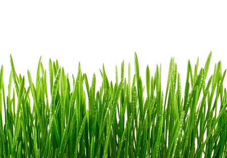 물에 젖은 녹색 잔디에 고립 된 흰색 배경을 삭제합니다