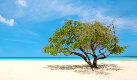 Exotic Beach in Dominikanische Republik, Punta Cana