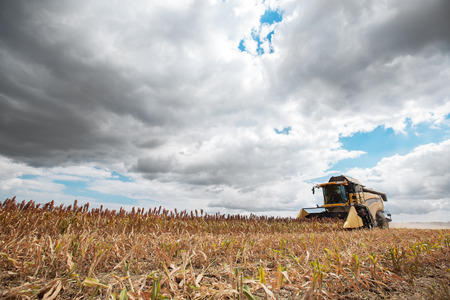 Combine harvester in work on farm field