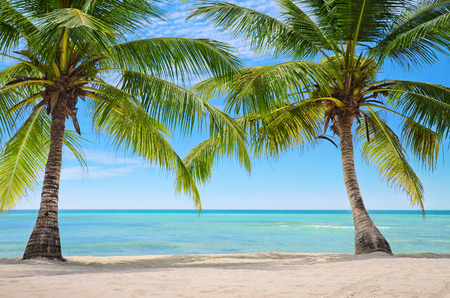 Two Palm trees on the background of a beautiful beach Imagens - 47869359
