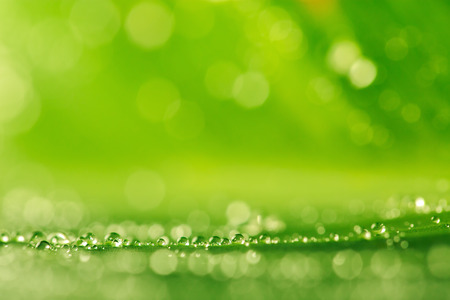 macro: Water drops on the fresh green grass as a background, macro shot