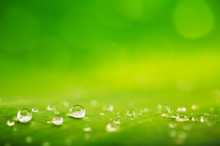 Green leaf with drops of water as natural background