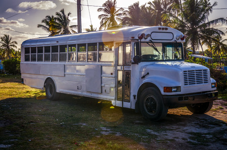 old bus: Adventure old bus and tropical garden with coconut palm trees