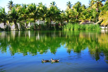 열 대 호수의 물, 도미니카 공화국에 두 남성 물 오리
