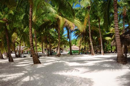 샌디 비치, Saona 섬, 도미니카 공화국