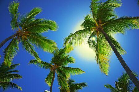 코코넛 야자수 열 대 해변, 전망보기 스톡 콘텐츠