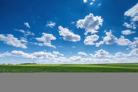 농토. 푸른 하늘에 흰 구름에 대 한 밀 필드입니다. 농업 현장