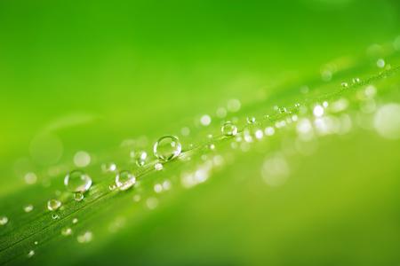 녹색 잎과 물 근접, 자연 녹색 개념을 삭제