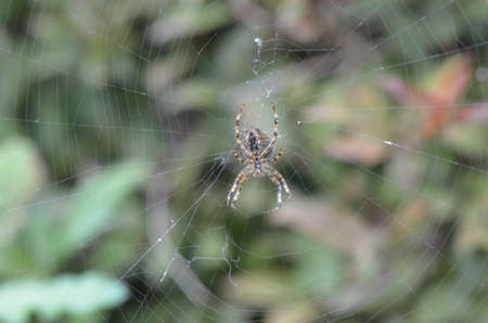 natur: Spinnennetz