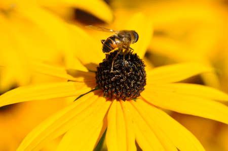 pflanze: Insekt auf Blume Stock Photo