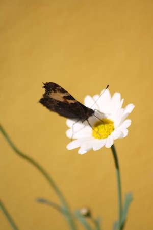 natur: Schmetterling auf Blte