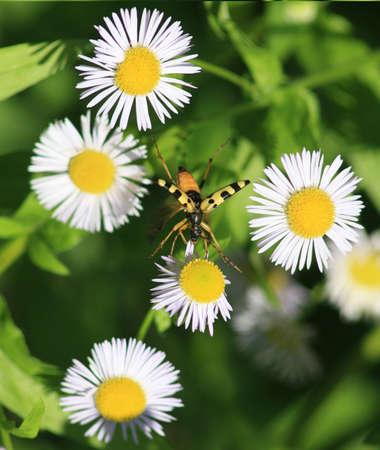 blte: Insekt auf Bl�te