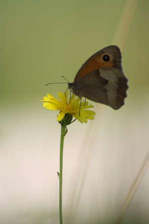 blte: Schmetterling auf Bl�te